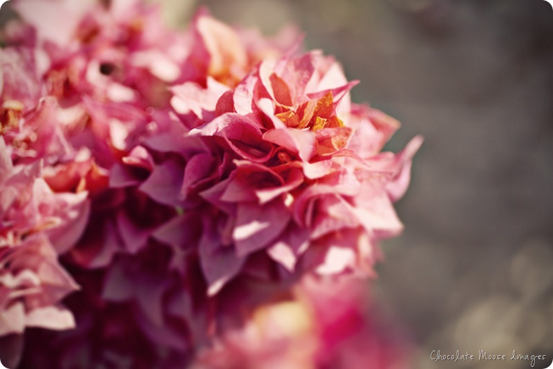 mexico flower photography