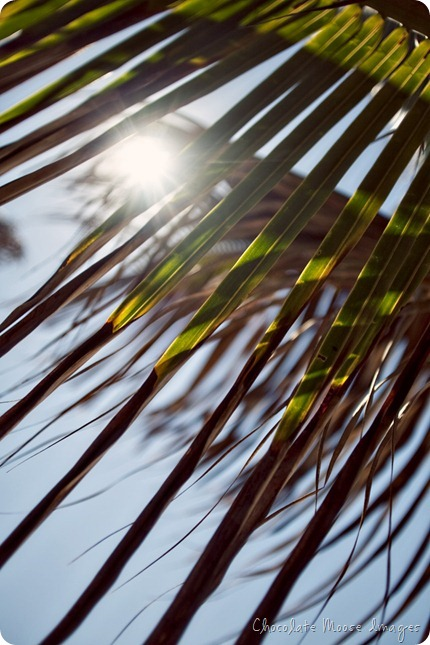 mexico, travel photography, at the beach, chocolate moose images