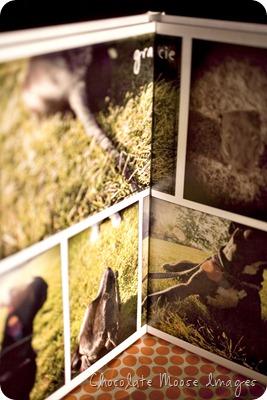 chocolate moose images, pet portrait photographer, minneapolis pets, book