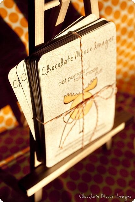 chocolate moose images, pet portrait photographer, minneapolis pets