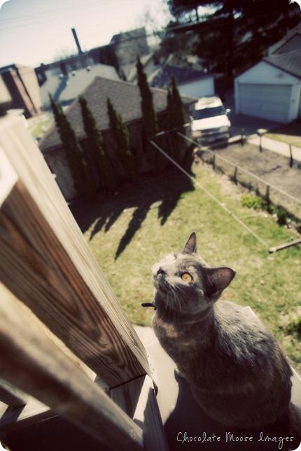 chocolate moose images, minneapolis pet portrait photography, outdoors, spring, cat portraits