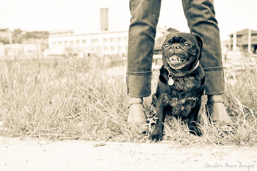 pet portrait, seattle, minneapolis pet photography, pugs, mom and pug, dog portrait, pug photos