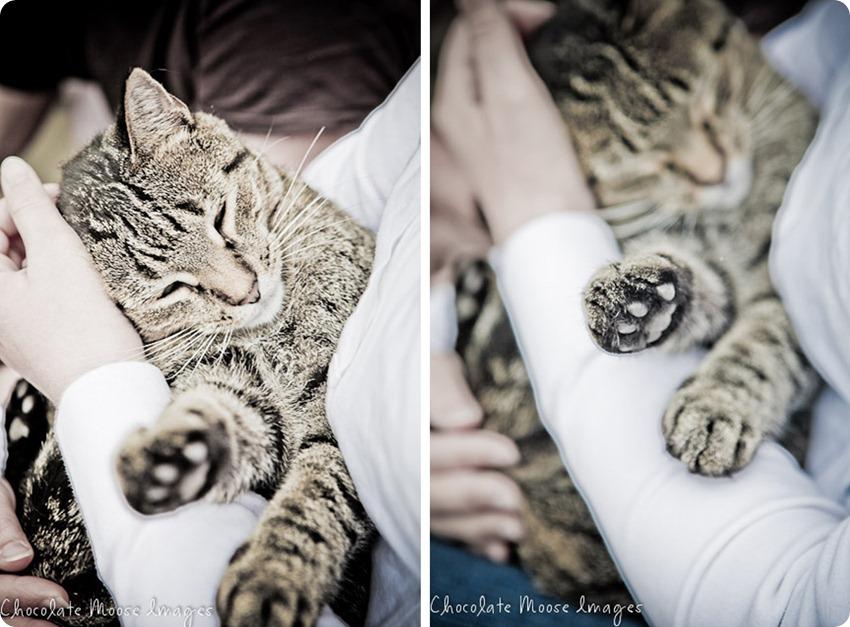 pet portrait photography, minneapolis pet portrait photographer, cat, sigmund, cat and dog best friends