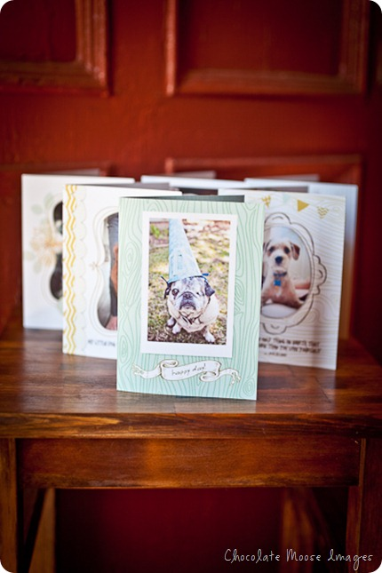pet photography, chocolate moose images, minneapolis pet portrait photographer, crafts, greeting cards, dog photography, dog portraits, 100% recycled cards
