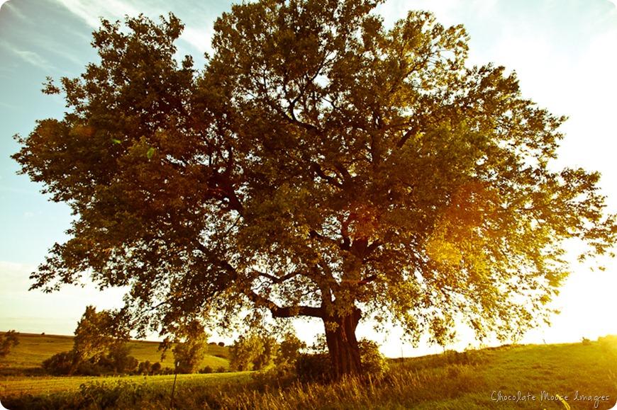 iowa farm, chocolate moose images, favorite tree