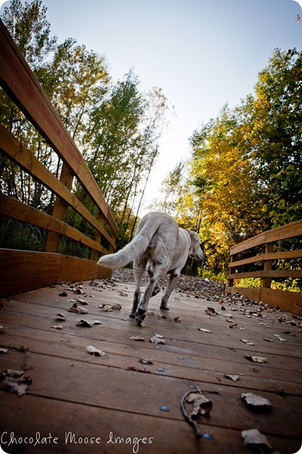 chocolate moose images, minneapolis pet photographer, dog portraits, park, fall images, pets