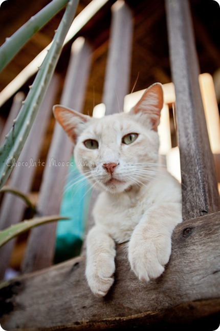 Cat photos of an orange, Mexican beach cat from a recent vacation.