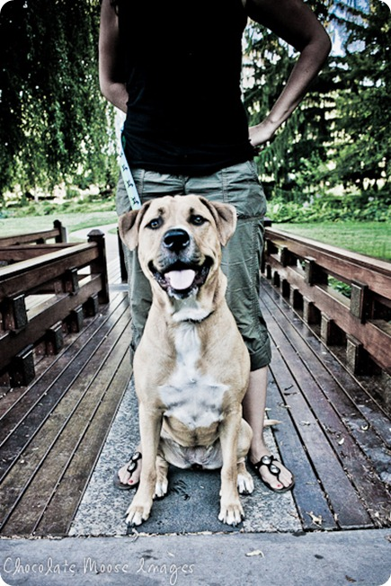 Pit bull, Lilah, poses with her mom at Lake Harriet in Minneapolis on a hot summer night before splashing in the lake to cool this pup down