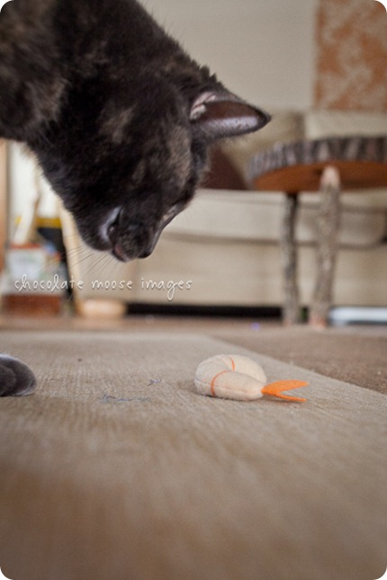 Tarra, one of 'the girls' stalks her favorite toy shrimp before pouncing on it and tossing it across the room