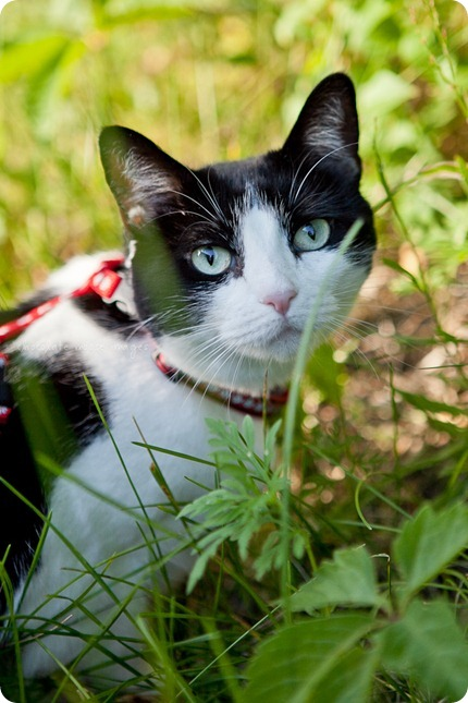 Penny, the kitty behind Woody's Pet Food Deli, shows off her kitty condo and backyard to Chocolate Moose Images one Minneapolis summer day
