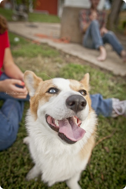 Wylie, the corgi, shares his many faces during a dog photo shoot with Chocolate Moose Images