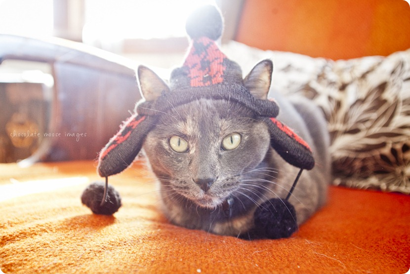 Meet Tarra, one of the kitties behind Chocolate Moose Images. She sure loves her MN ready winter hat!